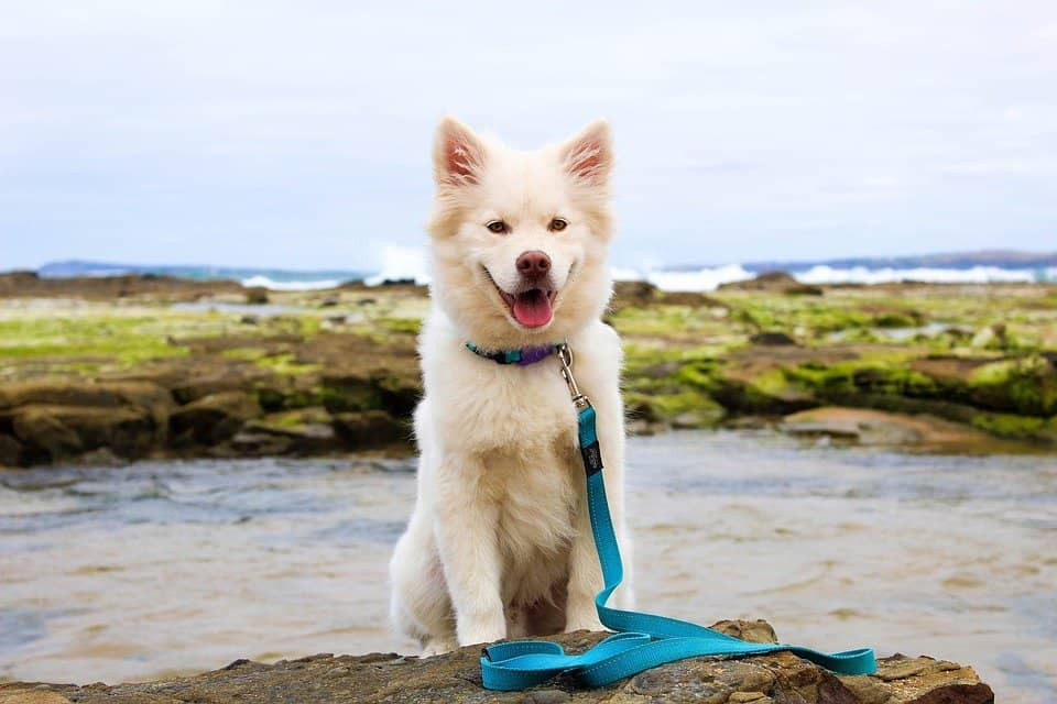 Top 15 dog friendly hotels in Wales
