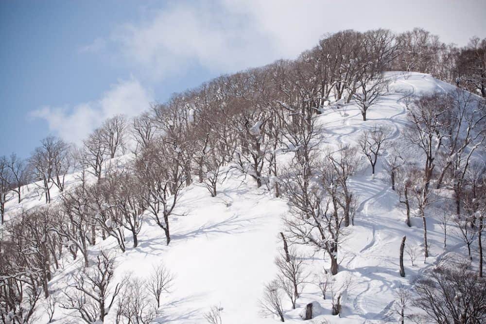 5 reasons you need to go skiing in Japan Global Grasshopper