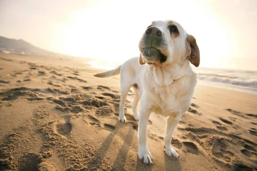 Top 15 Dog friendly hotels in Dorset