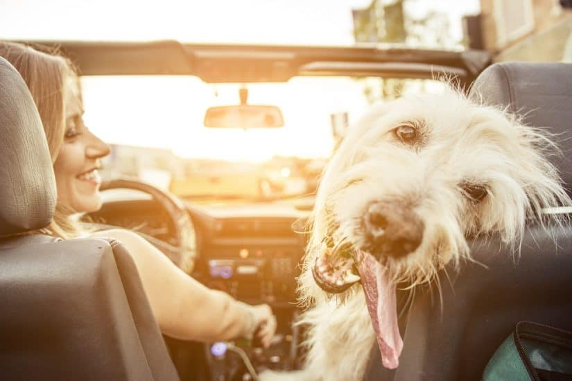 Pet friendly hotels in Santa Barbara