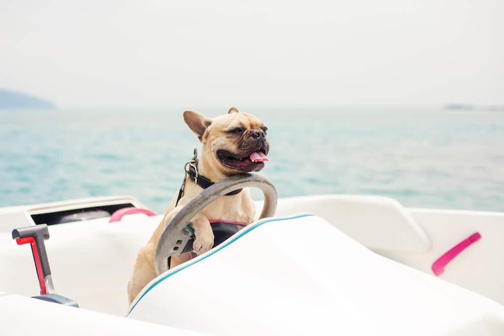 The best dog friendly hotels in Santa Barbara