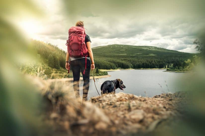 Top 15 dog friendly hotels in Lake District