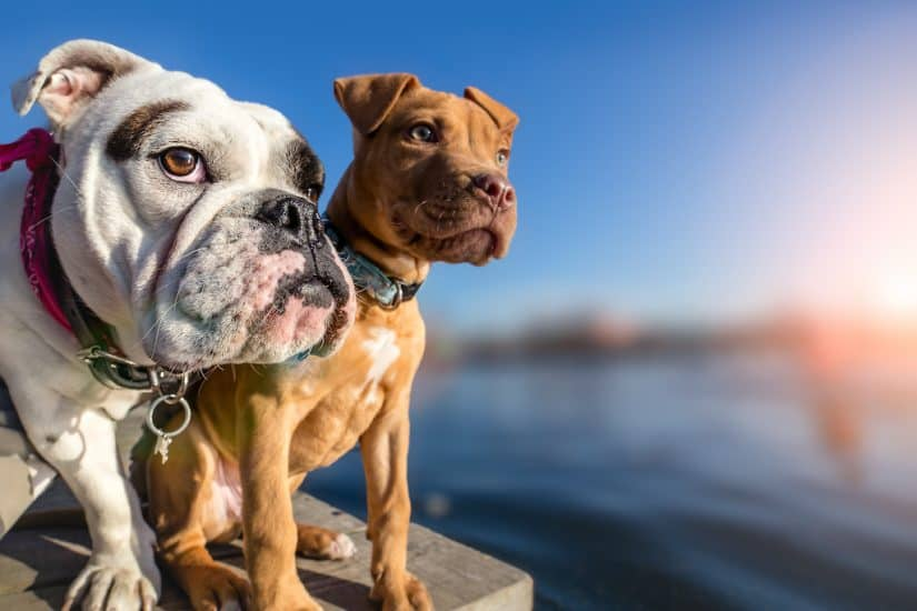 Top 15 dog friendly hotels in Norfolk