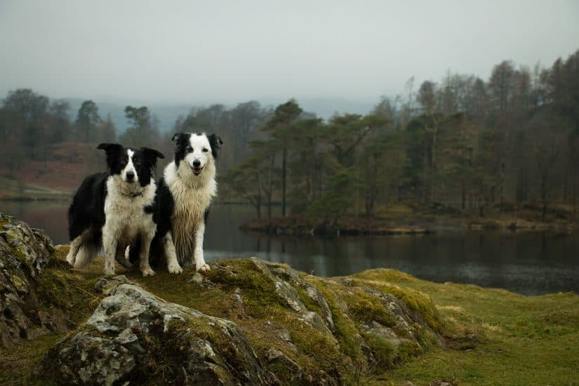 Top 15 dog-friendly hotels in the Lake District