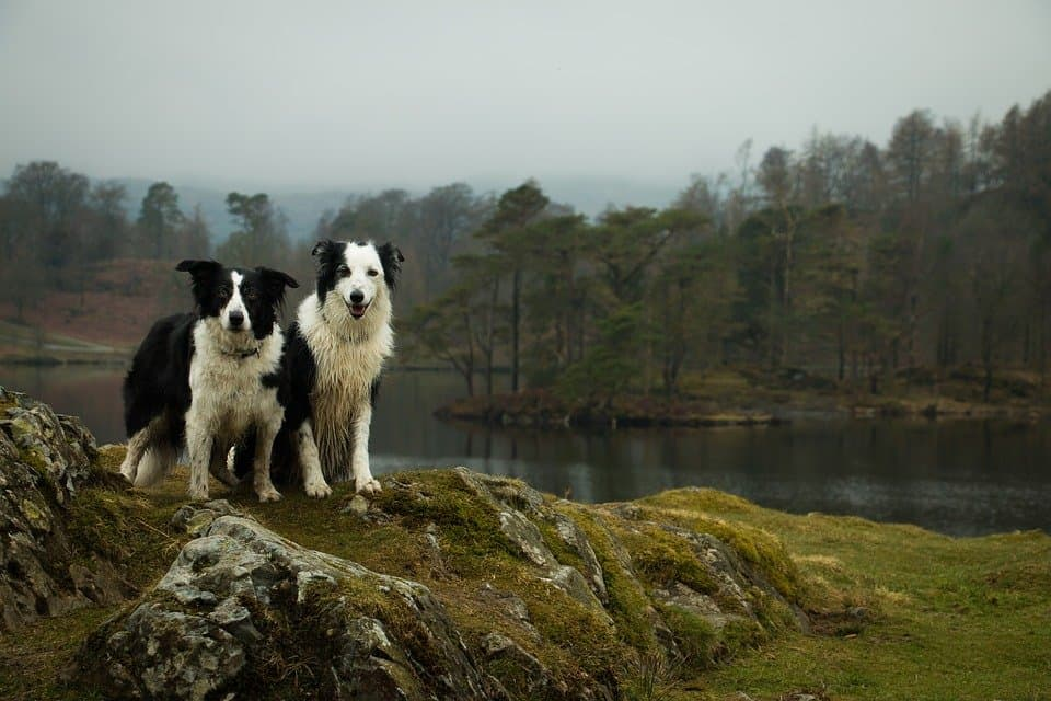 9 of the best dog-friendly UK destinations Global Grasshopper