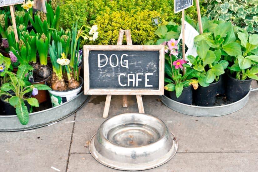 Best dog friendly restaurants Austin