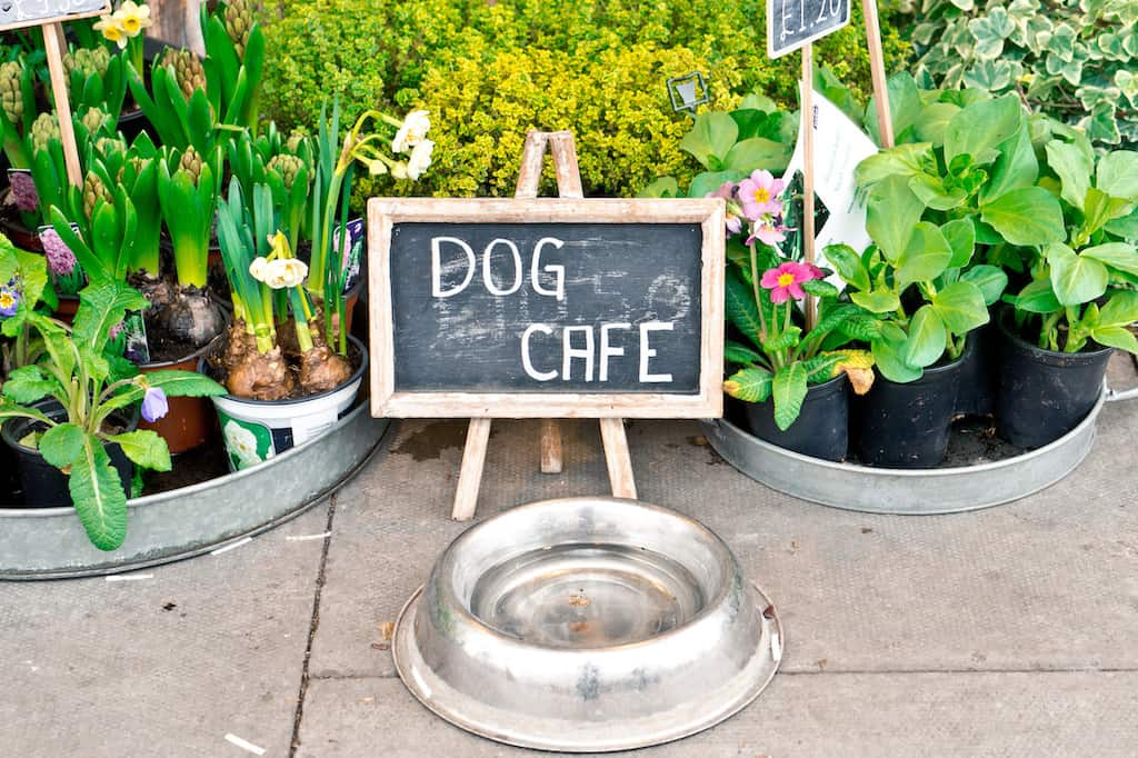 Best dog friendly restaurants Austin