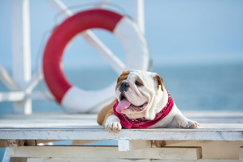 Dog friendly hotels in Santa Barbara