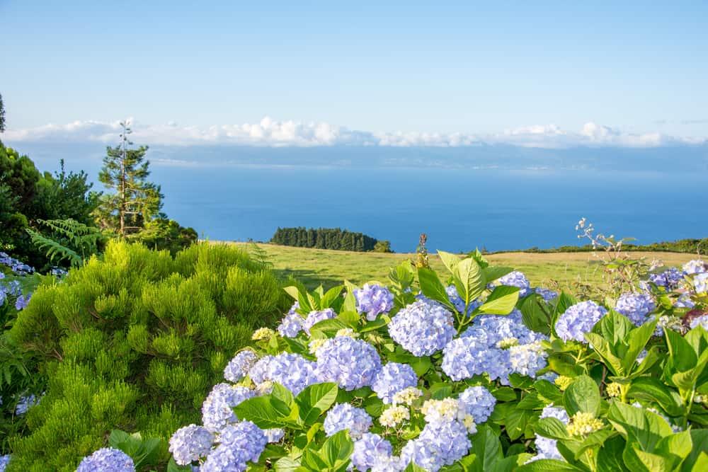 Pico Natural Park Azores