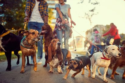 Dog friendly hotels in New york