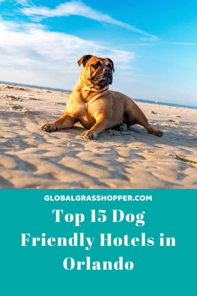 Pinterest - Top 15 Dog friendly hotels in Orlando