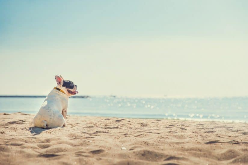Top 15 Dog friendly hotels in Virginia Beach