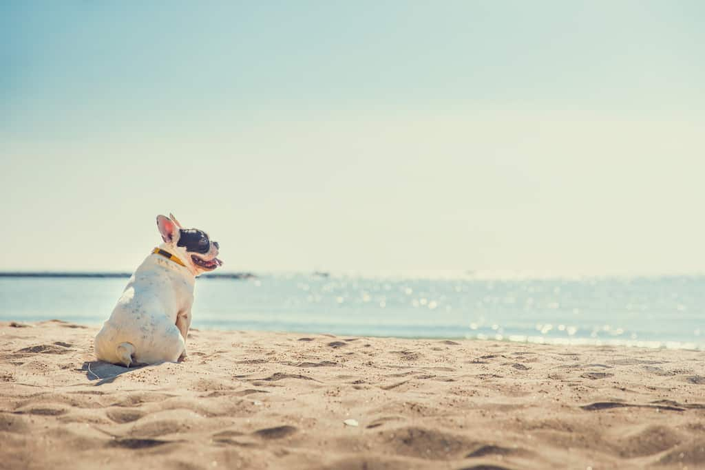 Top 15 Dog friendly hotels in Virginia Beach