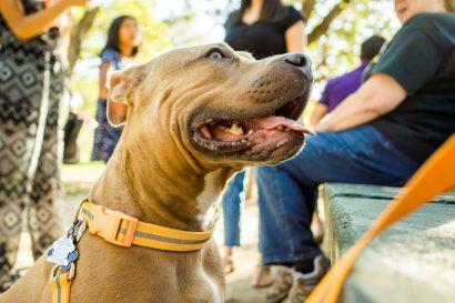 best dog friendly restaurants in Austin