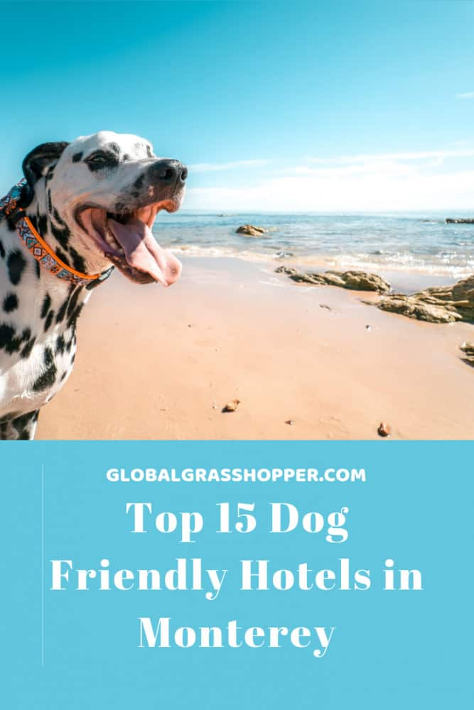 Pinterest - Top 15 Dog friendly hotels in Monterey