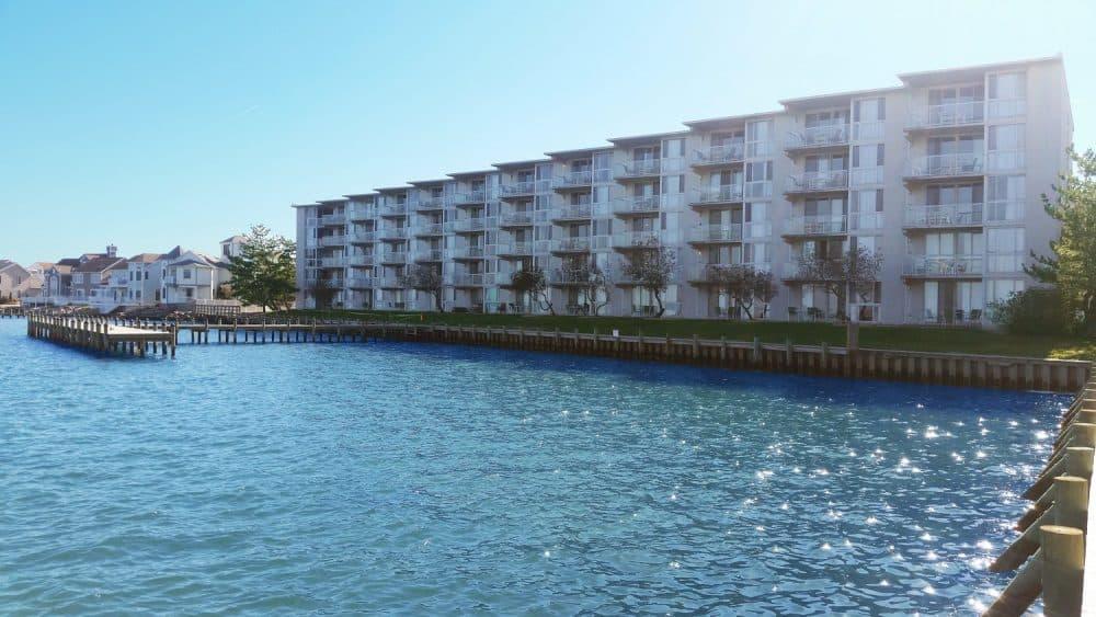 Top 15 dog-friendly hotels in Ocean City, Maryland 2020 Global Grasshopper