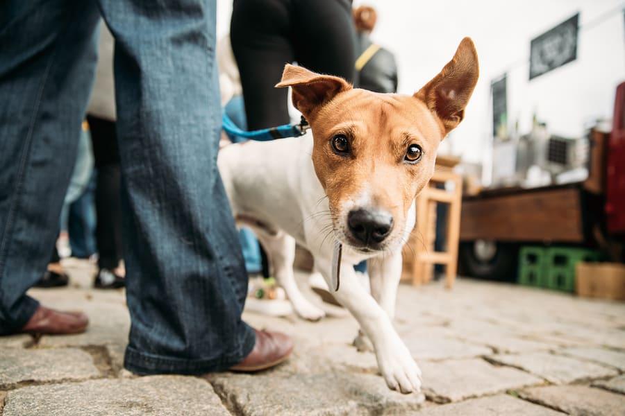 Top 15 Dog friendly hotels in Austin