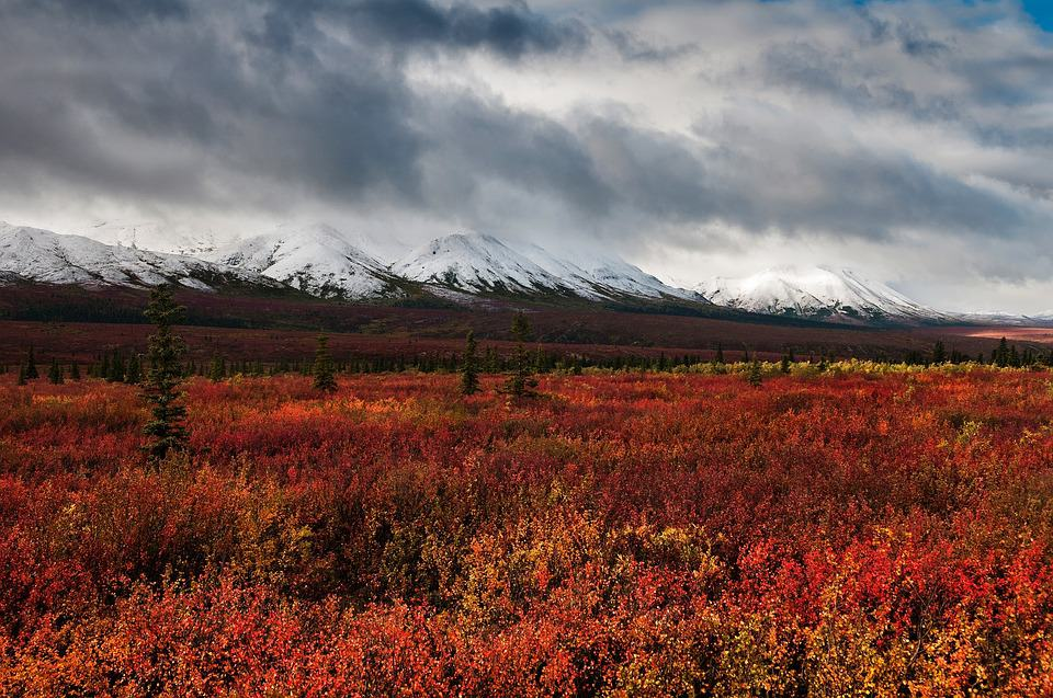 breathtaking fall colours in Alaska