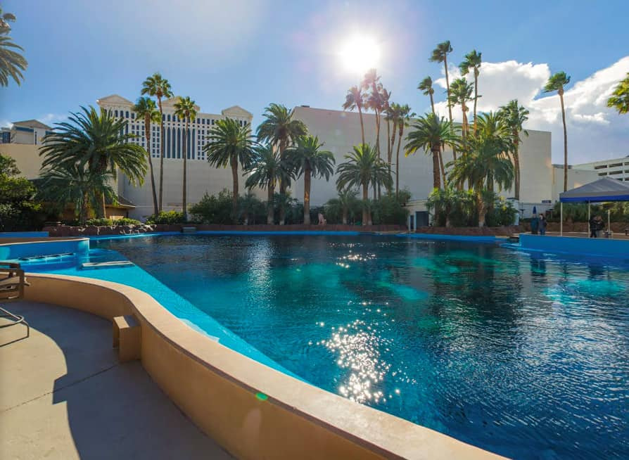 Dog friendly resort in Las Vegas