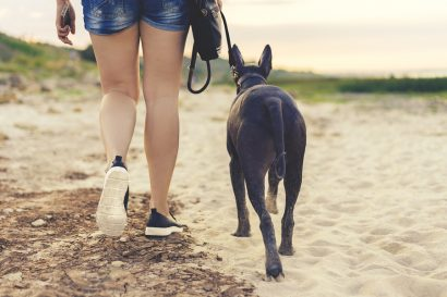 Top 15 dog friendly hotels in Cape Cod