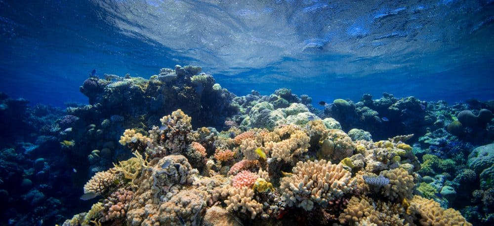 Great barrier reef - travel blog
