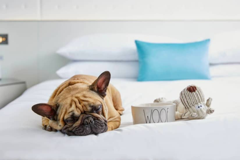 the best dog friendly hotels in Charlotte