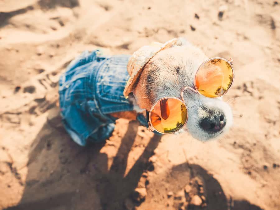San Diego dog beaches
