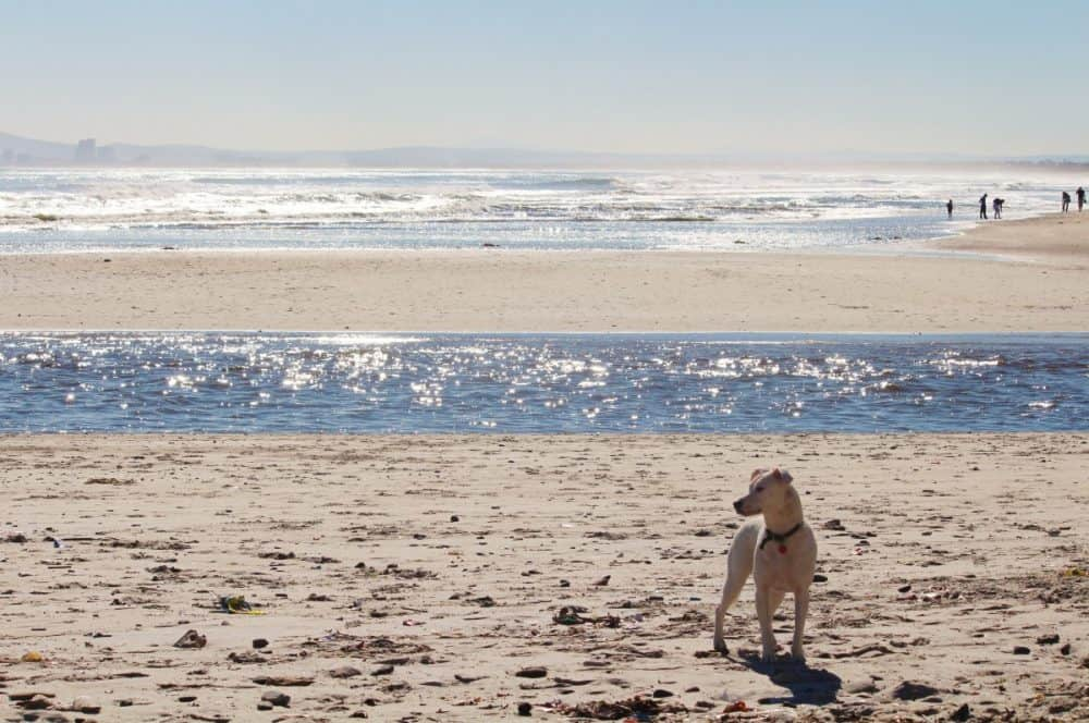 The best dog-friendly beaches in San Diego Global Grasshopper