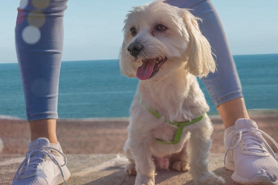 The best dog friendly beaches in San Diego