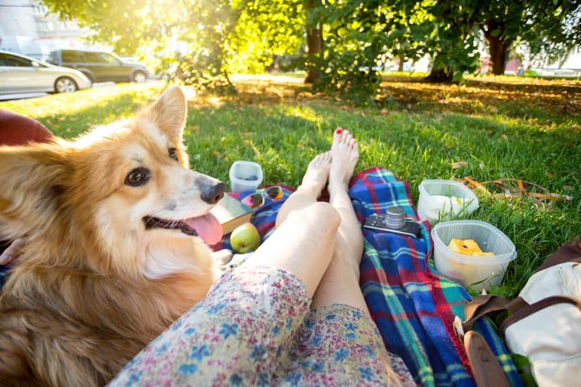 the best pet friendly hotels in Napa Valley