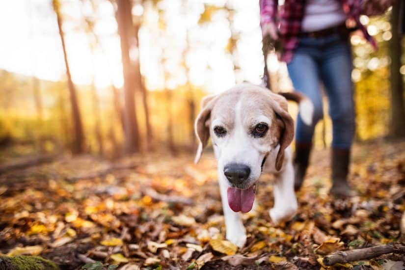 the best dog friendly hotels in Colorado Springs