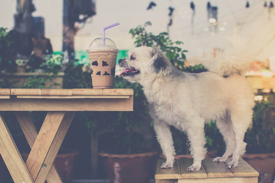 the best dog friendly restaurants in Portland