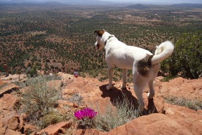 the best pet friendly hotels in Sedona
