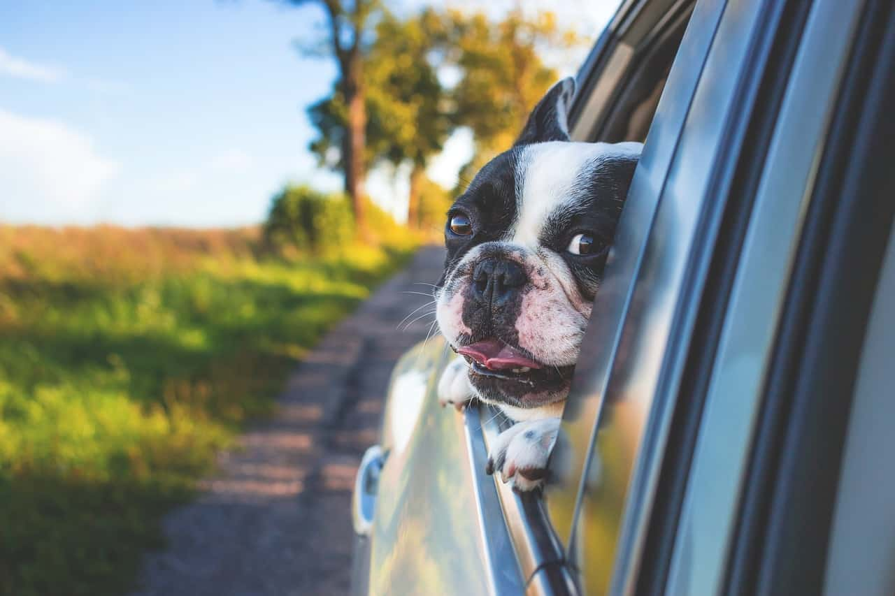 15 of the best pet/dog car seat covers