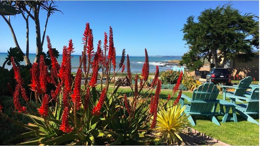 Casual pet friendly hotels in Cambria