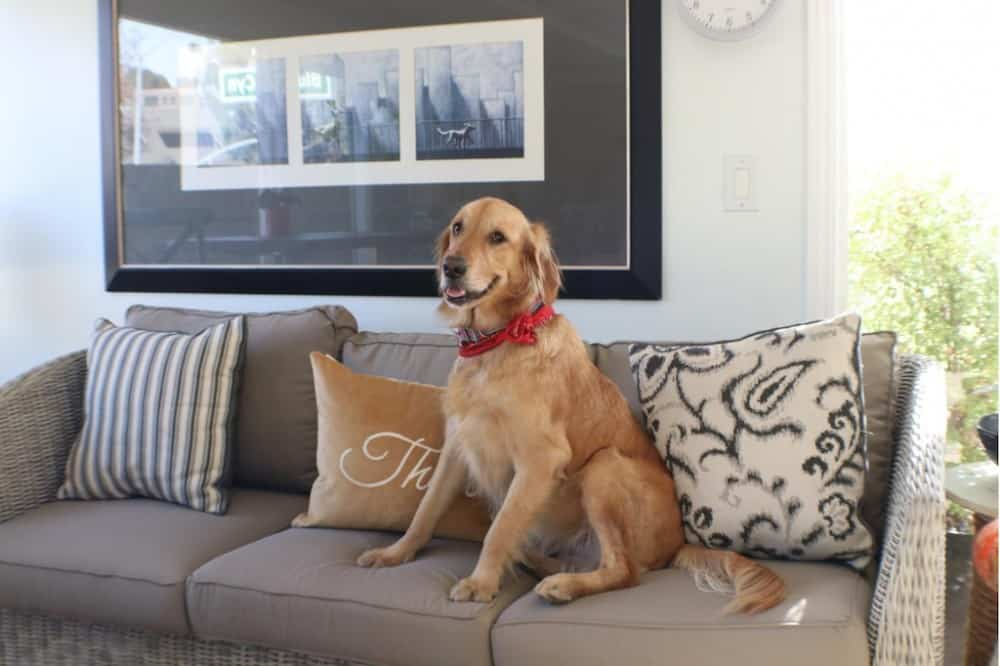 Seaside Laguna Inn & Suites - dog friendly