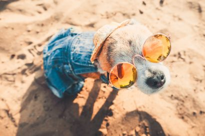 Top 15 dog friendly hotels in Miami