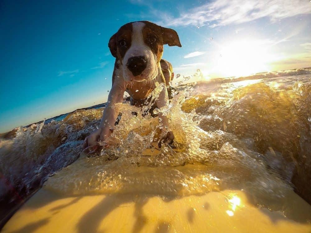 Top 15 of the best dog life jackets/flotation vests Global Grasshopper