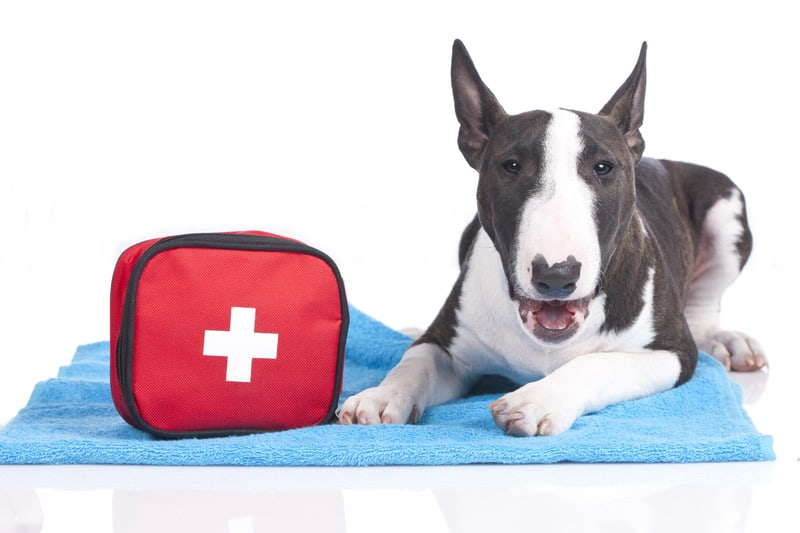 Top 15 of the best dog/pet first aid kits 2019