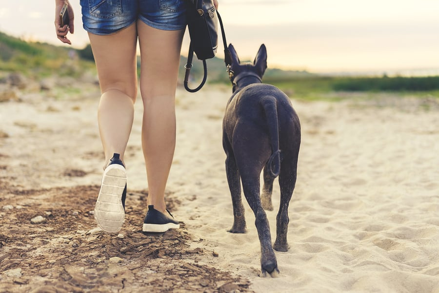 the best dog friendly hotels in Cambria