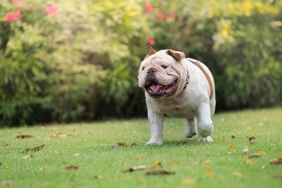 the best dog friendly hotels in Sacramento