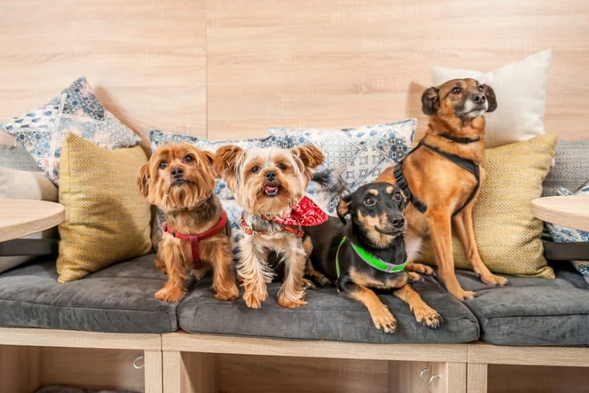 the best pet friendly hotels in Duluth