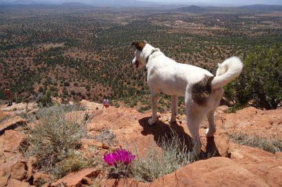 the best pet friendly hotels in Santa Fe
