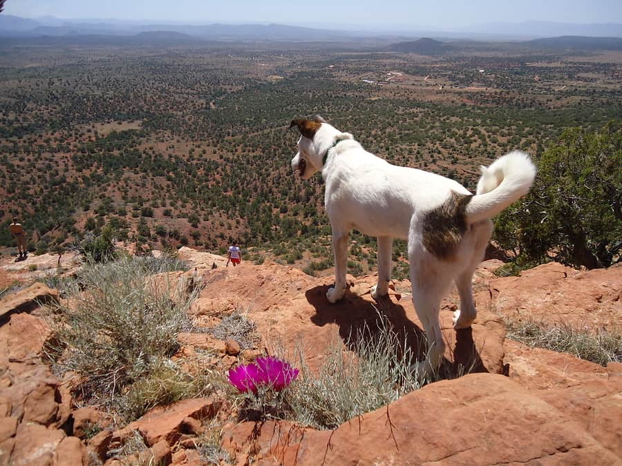 the best pet friendly hotels in Santa Fe