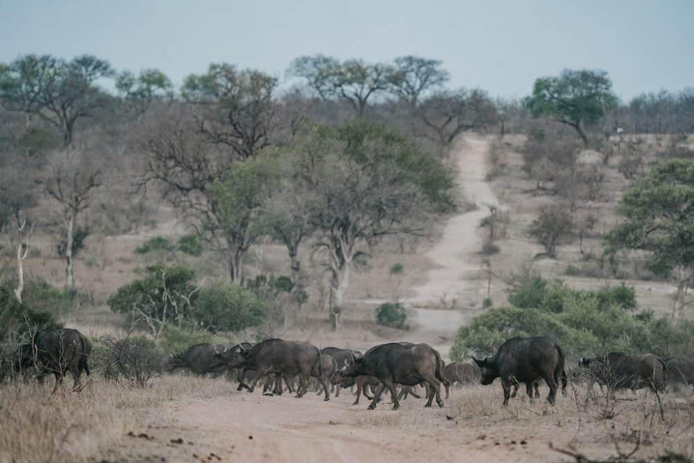 Manyeleti Reserve, South Africa