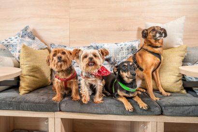 Dog friendly restaurants in Austin