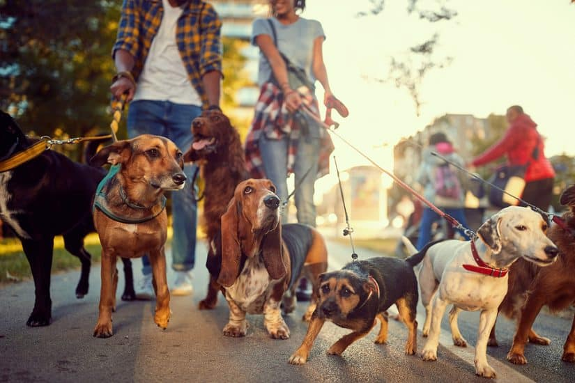 The best dog friendly restaurants in Chicago