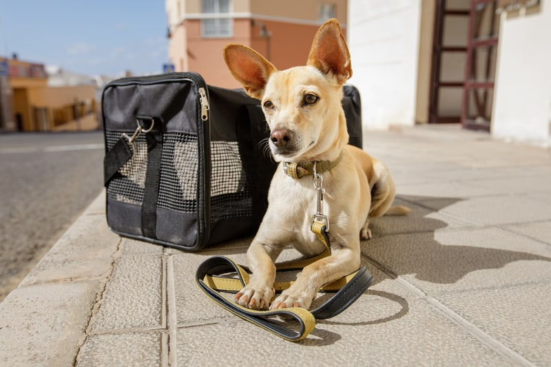 Top 15 of the best small dog/pet carriers reviewed!