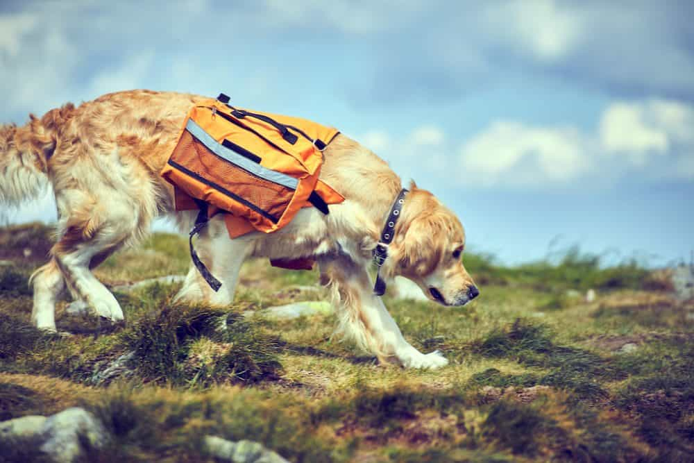 Top 15 of the best dog backpacks