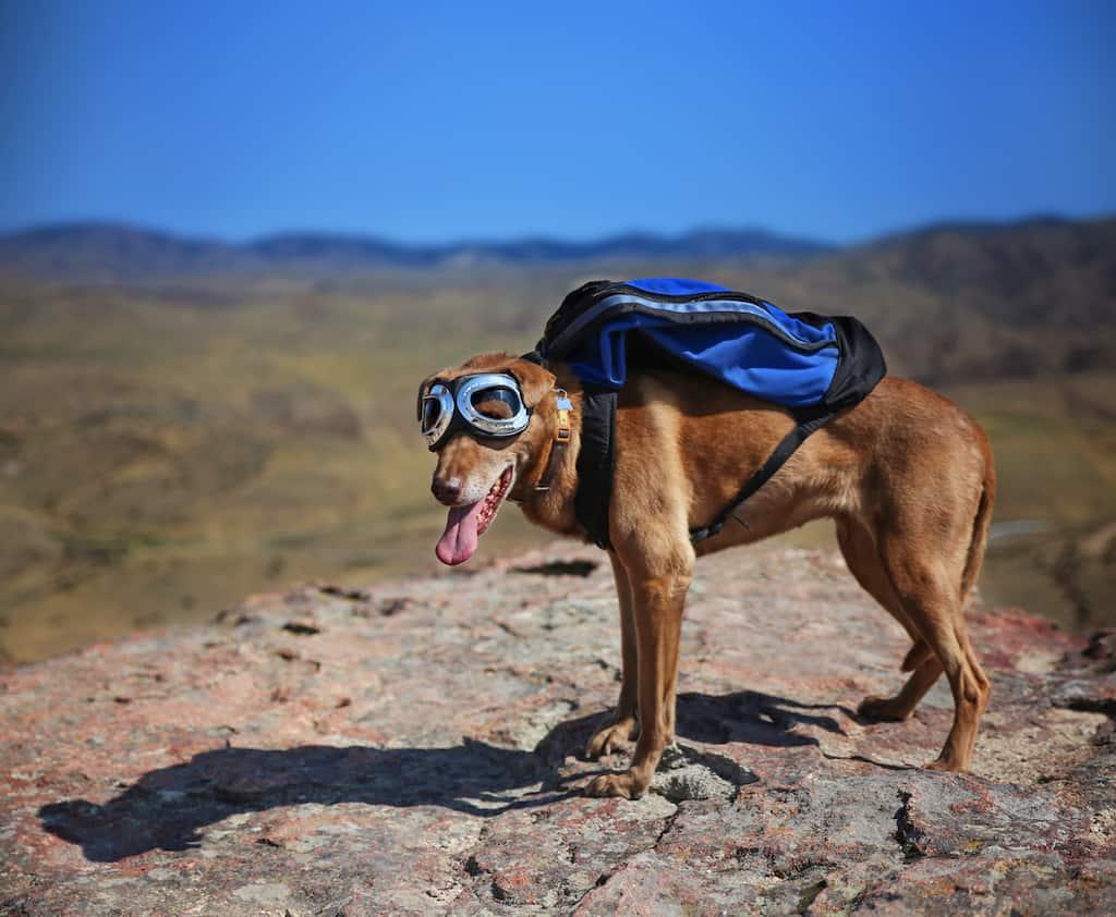 Best dog backpacks reviewed